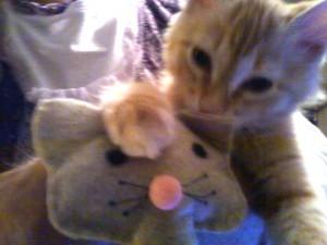cute kittenG